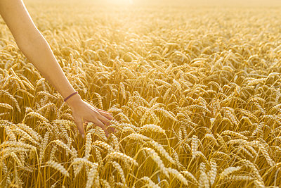 Hand of teenage girl touching wheat in field - p352m2039858 by Åke Nyqvist