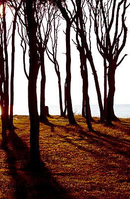 At the Baltic Sea - p4320729 by mia takahara