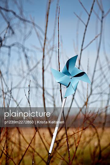 Blue pin wheel next to shrubbery - p1239m2272850 by Krista Keltanen