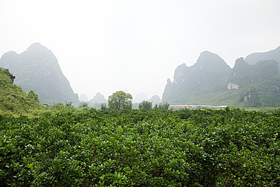 China, guangxi province, yangshuo landscape - p9244880f by Image Source