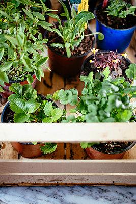 Urban Gardening - p728m1008032 von Peter Nitsch