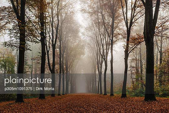 Herbstwald - p305m1091375 von Dirk Morla