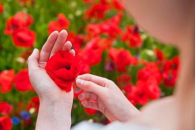 Woman holding fresh red poppy flower on field - p300m2197771 by Daniel Ingold