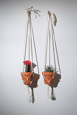 Hanging plants - p1149m1133388 by Yvonne Röder