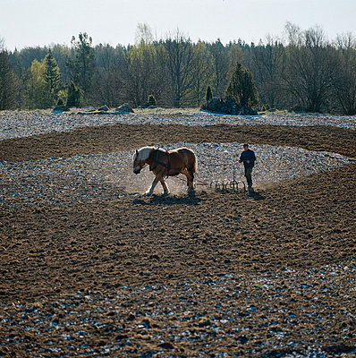 Harrowing with a horse - p4692086 by Peter Gerdehag