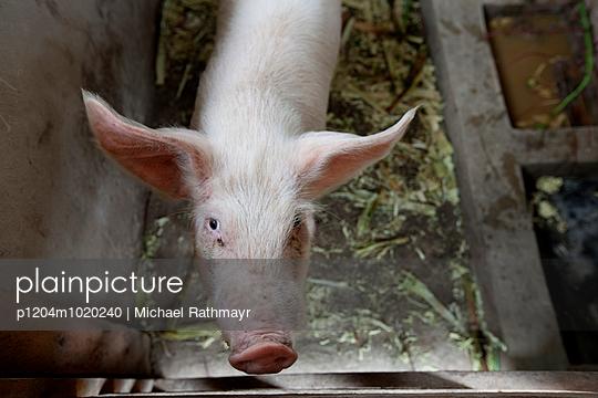 Schweinestall - p1204m1020240 von Michael Rathmayr