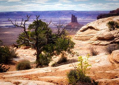 Canyonlands - p1154m1138535 by Tom Hogan