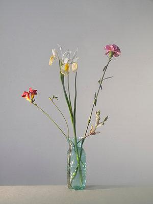 Buntes Blumenarrangement - p444m924652 von Müggenburg