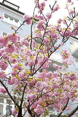 Blooming springtime - p454m1143679 by Lubitz + Dorner