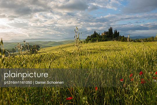Landschaft bei San Quirico d`Orcia, Val d`Orcia, Provinz Siena, Toskana, Italien, UNESCO Welterbe - p1316m1161050 von Daniel Schoenen