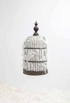 Vogelkäfig voller Feders - p1670m2248766 von HANNAH
