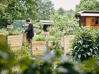 Woman gardening - p962m2175433 by Robert Schlossnickel