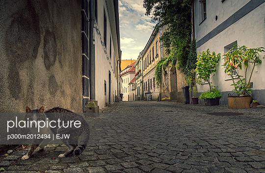 Austria, Steyr, cat on street, alley - p300m2012494 von EJW