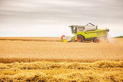 Serbia, Vojvodina, Combine harvesting wheat field - p300m2024210 von oticki
