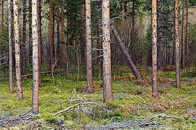 p816m745010 von Bjørn Jørgensen
