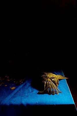 Toter Vogel - p1174m2044602 von lisameinen