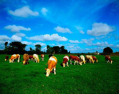p44211052f von The Irish Image Collection