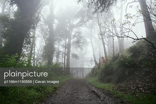 p1166m1150559 von Cavan Images