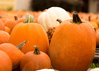 Close-up of pumpkins on field at farm - p1166m2065946 by Cavan Social