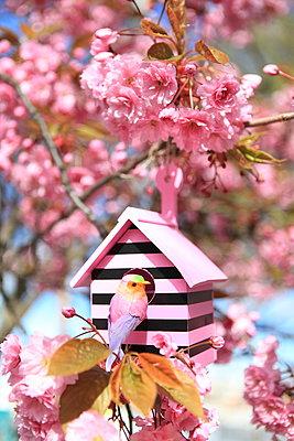 Süßes Vogeläuschen - p045m1020585 von Jasmin Sander