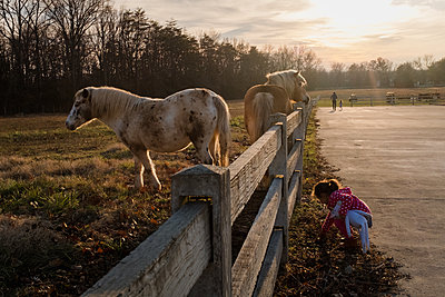 little girl playing near horses fenced in pasture - p1166m2216935 by Cavan Images