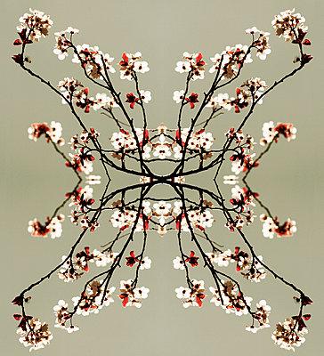 Blütencollage - p415m1460842 von Tanja Luther