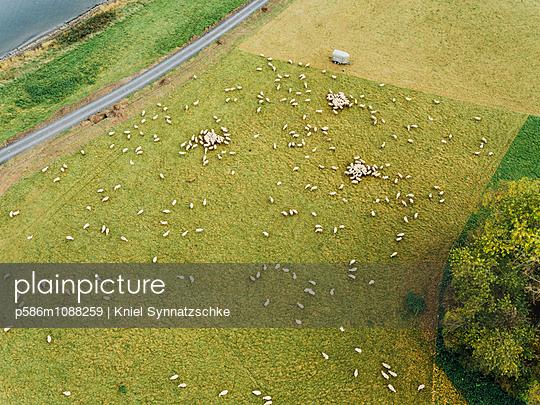 Schafherde auf einer Wiese, Luftaufnahme - p586m1088259 von Kniel Synnatzschke