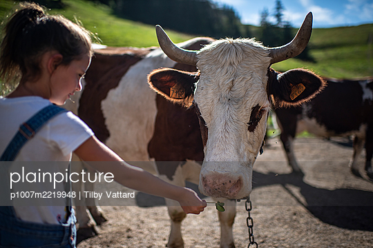 France, Girl and cow - p1007m2219948 by Tilby Vattard