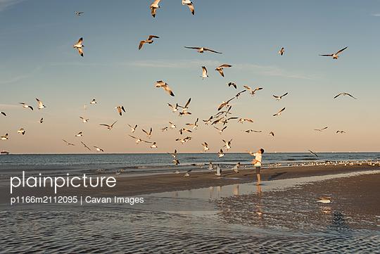 Boy feeding seagulls on beach on Galveston Island, Texas - p1166m2112095 by Cavan Images