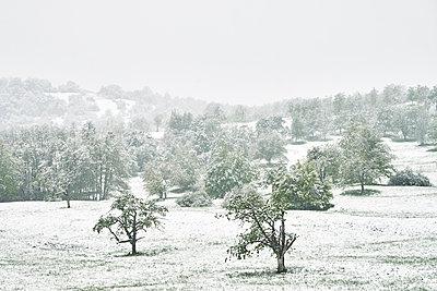 Wiese mit Bäumen im Schnee im Frühling - p1312m2089653 von Axel Killian