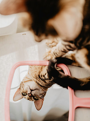 Reflection of relaxed cat in glass seen from above - p1522m2082753 by Almag