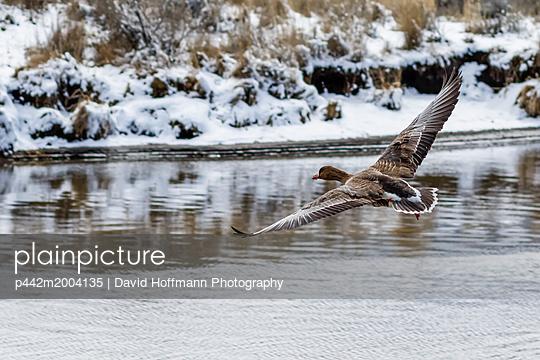 p442m2004135 von David Hoffmann Photography