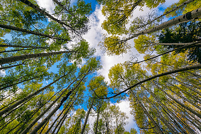 Low angle view of trees against sky in forest - p1166m1543134 by Cavan Images
