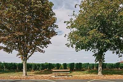 Park bench in front of vineyard, Bergerac, Aquitaine, France - p429m1504836 by Gu