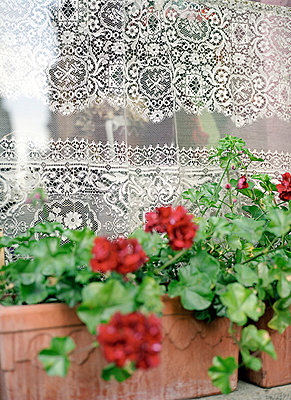 Balcony plant - p6060237 by Iris Friedrich