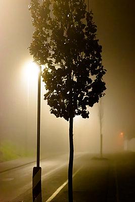 Straßenbaum im Nebel - p979m1513291 von Martin Kosa