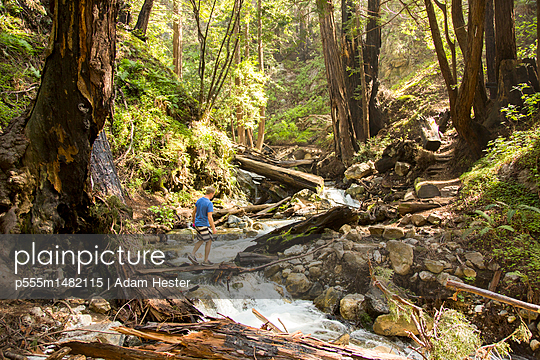Caucasian man walking on wooden plank over forest stream - p555m1482115 by Adam Hester
