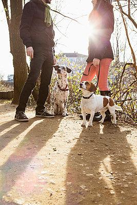 Hunde im Park - p1156m938961 von miep