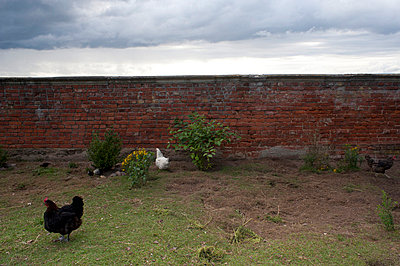 Animal husbandry - p7630128 by co-o-peration