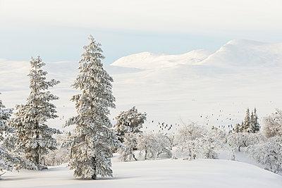 p312m1011839f von Mikael Svensson