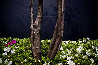 Thin tree trunks next to a building in Tokyo, Japan. - p934m1177237 by Dominic Blewett