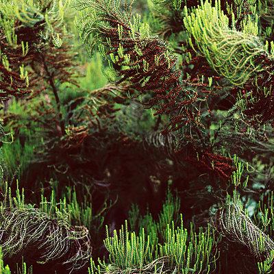 Nadelbaum - p1195m1195468 von Kathrin Brunnhofer