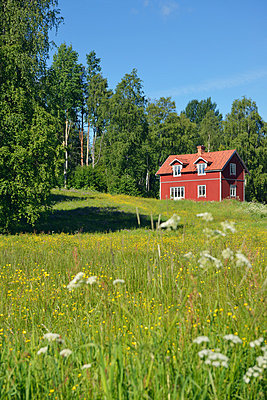 Red wooden house in Sweden - p715m880627 by Marina Biederbick
