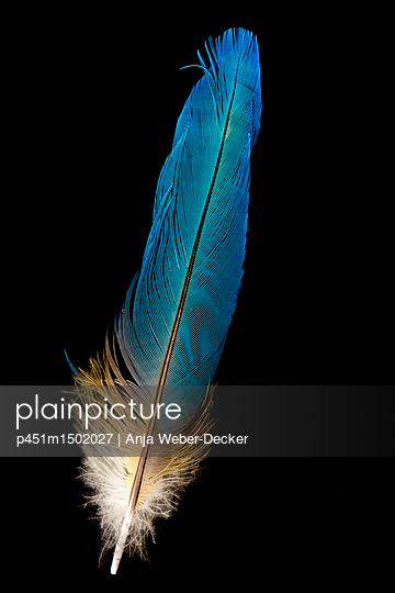 p451m1502027 by Anja Weber-Decker