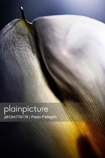 p912m776178 von Paolo Pellegrin