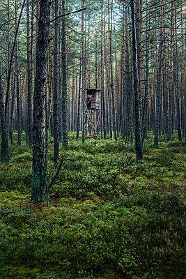 Wald - p947m945795 von Cristopher Civitillo