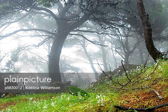 Morning fog - p5830012 by Kristina Williamson