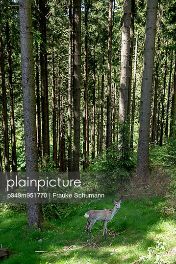 Reh, künstlich - p949m951770 von Frauke Schumann