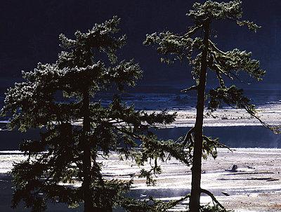 Vancouver Island - p1016m792623 von Jochen Knobloch