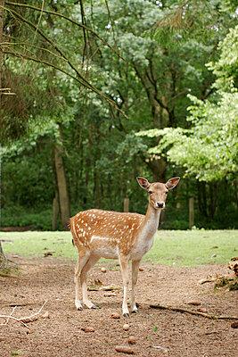 Red deer - p2490412 by Ute Mans